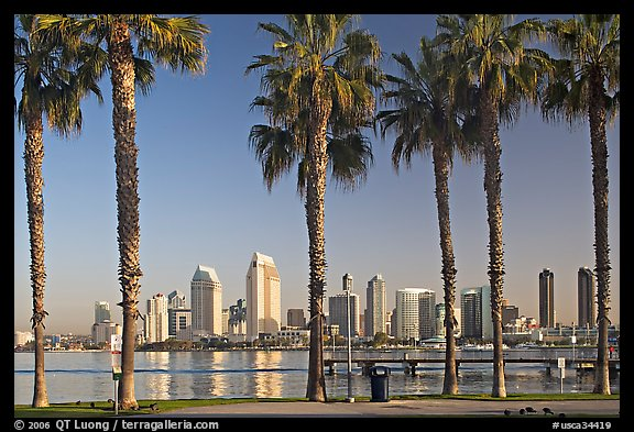 Palm trees and skyline, early morning. San Diego, California, USA (color)