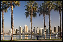 Palm trees and skyline, early morning. San Diego, California, USA