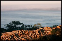 Eroded bluffs, ocean and fog, sunrise, Torrey Pines State Preserve. La Jolla, San Diego, California, USA ( color)