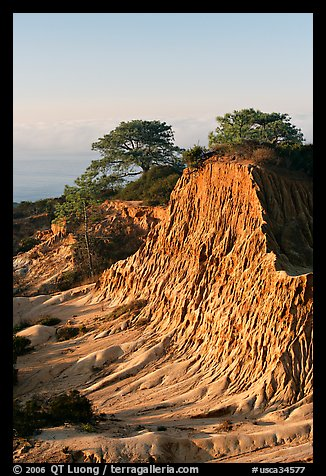 Broken Hill and Torrey Pines, sunrise, Torrey Pines State Preserve. La Jolla, San Diego, California, USA (color)