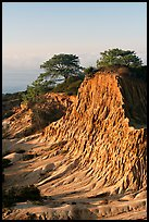 Broken Hill and Torrey Pines, sunrise, Torrey Pines State Preserve. La Jolla, San Diego, California, USA