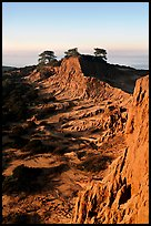 Steep weathered sandstone cliffs, Torrey Pines State Preserve. La Jolla, San Diego, California, USA ( color)