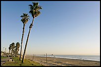 Tall palm trees, waterfront promenade, and beach. Huntington Beach, Orange County, California, USA