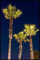 Lighted palm trees by night. Huntington Beach, Orange County, California, USA ( color)