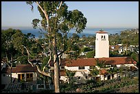 Eucalyptus tree and church. Laguna Beach, Orange County, California, USA