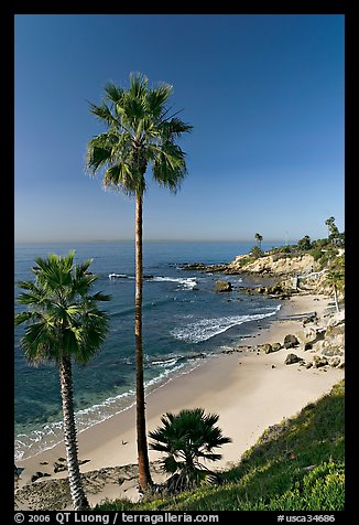 Palm Trees And Rockpile Beach Laguna Orange County California USA