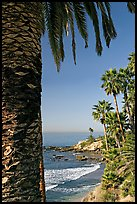 Beach and palm trees in Heisler Park. Laguna Beach, Orange County, California, USA