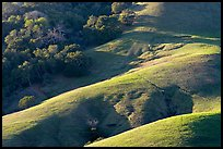 Hills and trees. California, USA (color)