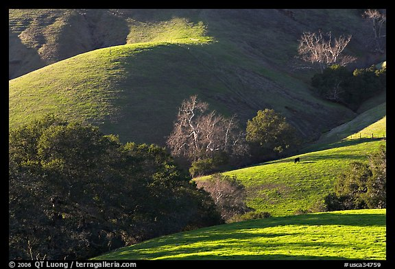 Pastures and hills. Morro Bay, USA (color)
