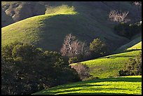 Pastures and hills. California, USA (color)