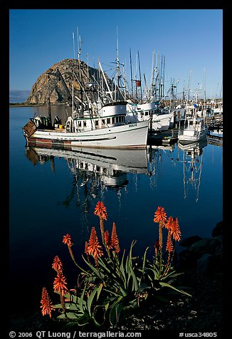 Flowers, fishing boats,and Morro Rock, morning. Morro Bay, USA (color)