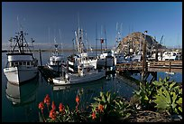 Flowers, harbor, and Morro Rock, morning. Morro Bay, USA ( color)