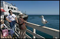 Tourists looking at a seagull on the wharf. Santa Cruz, California, USA (color)