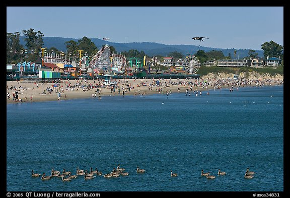 Pelicans, beach, and amusement park. Santa Cruz, California, USA