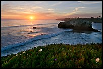 Iceplant and seastack, Natural Bridges State Park, sunset. Santa Cruz, California, USA