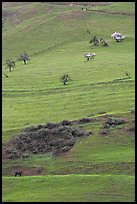 Hillside pastures in spring, Mount Hamilton Range foothills. San Jose, California, USA (color)