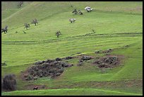 Hillside farmlands in spring, Mount Hamilton Range foothills. San Jose, California, USA ( color)