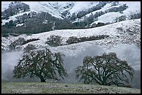 Two oaks and snowy hills, Joseph Grant Park. San Jose, California, USA ( color)