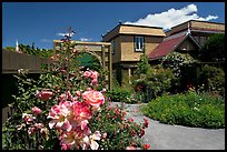 Roses in backyard. Winchester Mystery House, San Jose, California, USA (color)