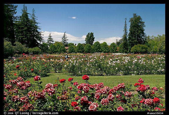 Picture Photo San Jose Rose Garden San Jose California Usa