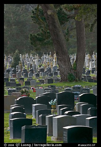 Dense headstones in cemetery, Colma. California, USA (color)