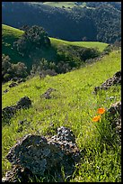 Rocks, poppies, and hillsides, Sunol Regional Park. California, USA ( color)