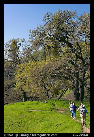 Group of hikers on faint trail, Sunol Regional Park. California, USA (color)