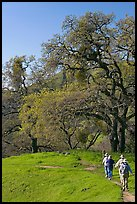 Group of hikers on faint trail, Sunol Regional Park. California, USA