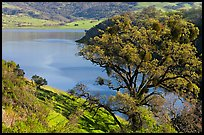 Calaveras Reservoir in spring. California, USA