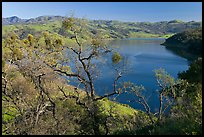 Oak Trees and Calaveras Reservoir. California, USA ( color)