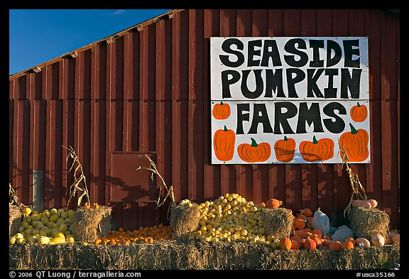 Seaside pumpkins farms sign on red barn. California, USA