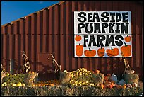 Seaside pumpkins farms sign on red barn. California, USA ( color)