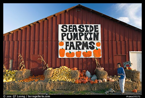 Woman checking out pumpkins in front of red barn. California, USA (color)
