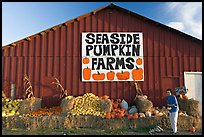 Woman checking out pumpkins in front of red barn. California, USA ( color)