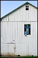 Figures in barn window and cats, Rancho San Antonio Preserve, Los Altos. California, USA (color)