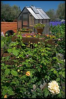 Flowers and small greenhouse, Sunset Gardens. Menlo Park,  California, USA ( color)