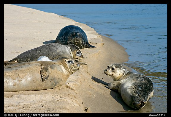 Two seals, Pescadero Creek State Beach. San Mateo County, California, USA (color)