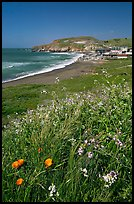 Wildflowers and and Rockaway beach, Pacifica. San Mateo County, California, USA