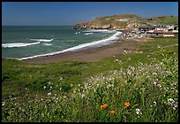 Rockaway Beach and wildflowers, Pacifica. San Mateo County, California, USA