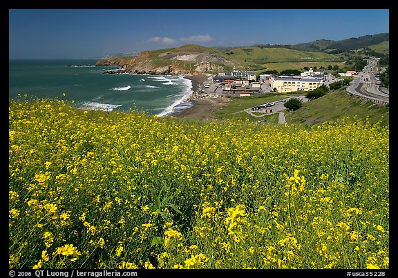Picturephoto yellow mustard flowers beach and highway pacifica yellow mustard flowers beach and highway pacifica san mateo county california usa mightylinksfo