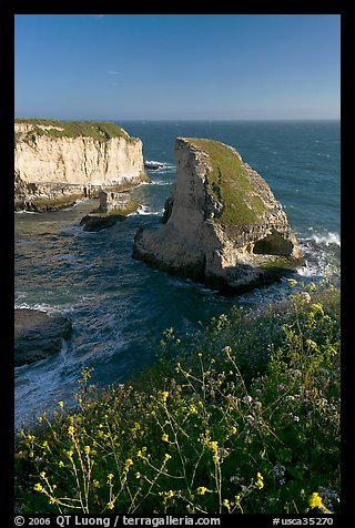 Flowers and rock island near Davenport. California, USA
