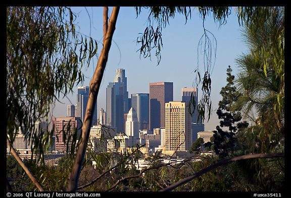 Downtown skyline seen through trees. Los Angeles, California, USA (color)