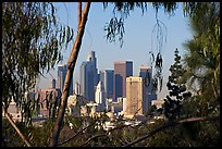 Downtown skyline seen through trees. Los Angeles, California, USA