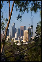 Skyline through trees. Los Angeles, California, USA (color)