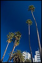Palm trees and hotels. Santa Monica, Los Angeles, California, USA ( color)