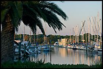 Palm tree and marina. Redwood City,  California, USA ( color)