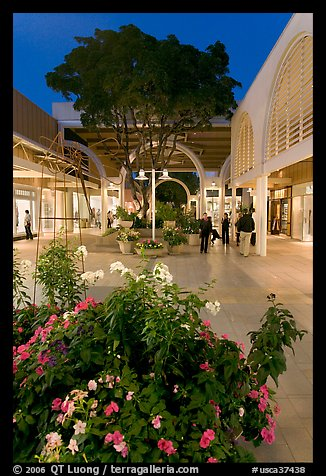Vegetation and stores in main alley of Stanford Mall at night. Stanford University, California, USA (color)