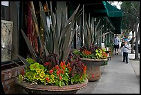 Flowers on Main Street, with family strolling by. Half Moon Bay, California, USA