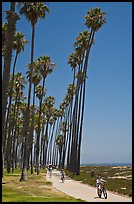 Families riding on beachside pathway. Santa Barbara, California, USA (color)