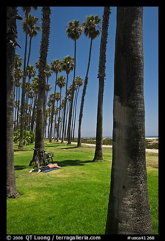 Man with bicycle laying on grass bellow beachside palm trees. Santa Barbara, California, USA (color)